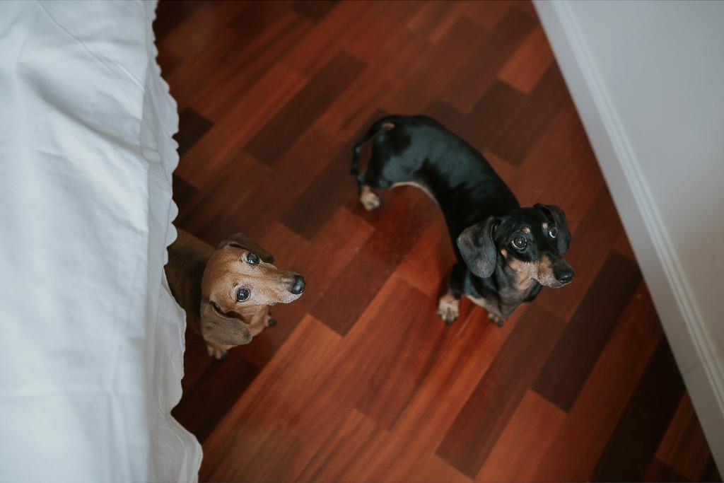 cagnolini partecipano al servizio fotografico di famiglia
