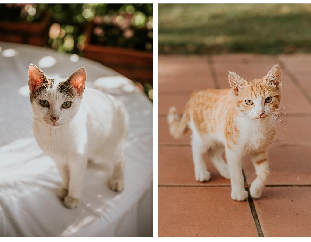 i gatti giocano nel giardino della sposa